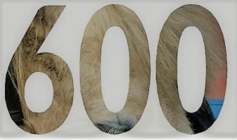 600-likes-danke